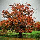 Autumnal Tree by David Carton