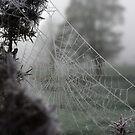 Cold Web by Nasibu Mwande