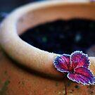 Strawberry leaf by Nasibu Mwande