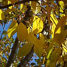 Autumn leaves by MONIGABI