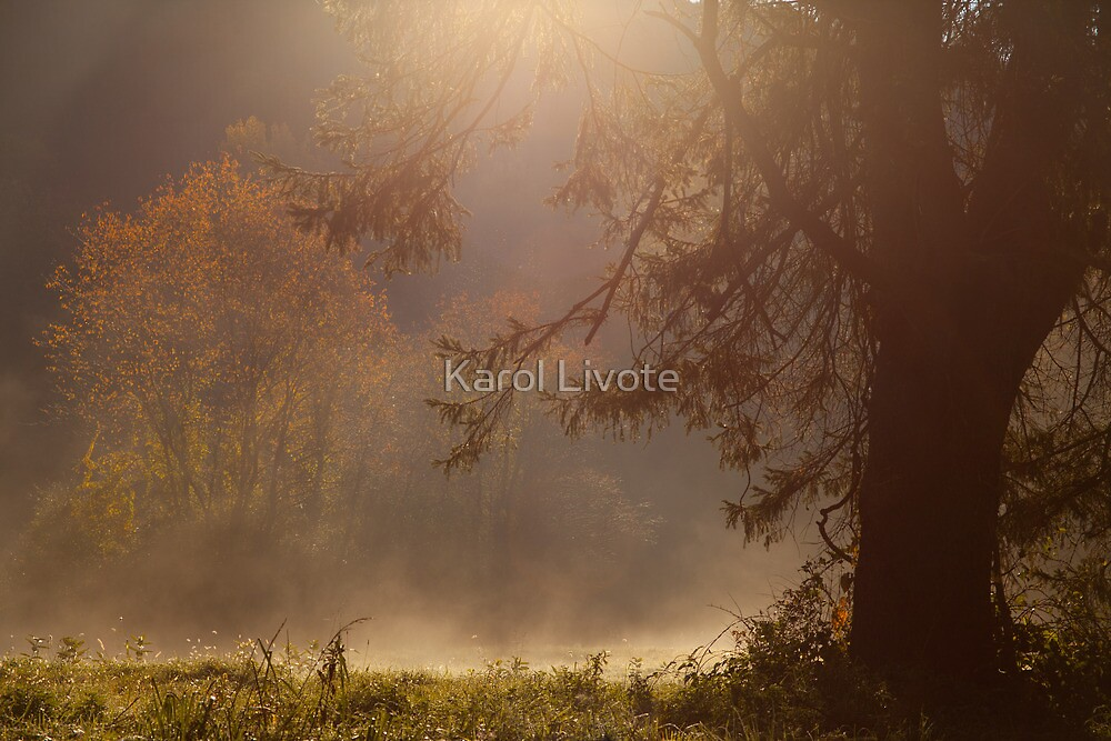 Peaceful Moments by Karol Livote