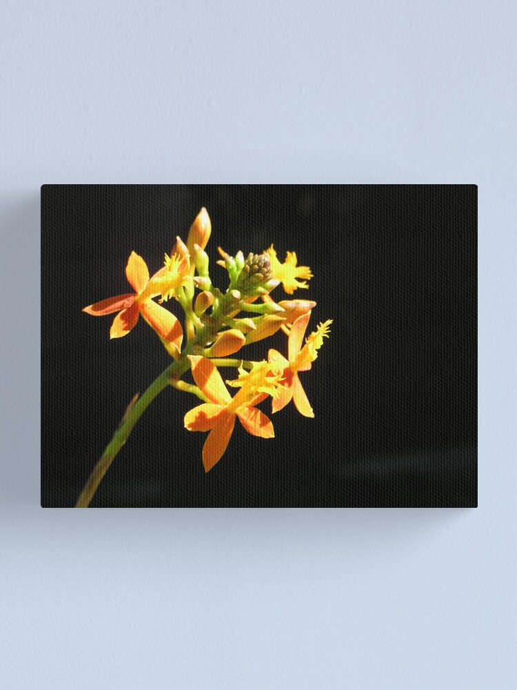Alternate view of Yellow orchid with dark background Canvas Print