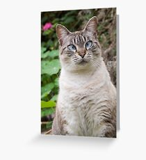 Cross-eyed cat Greeting Card