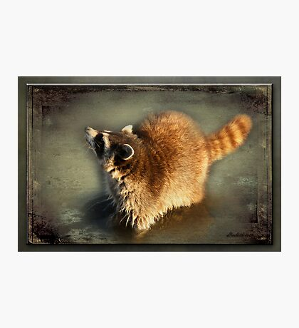 Rascal the Racoon Photographic Print
