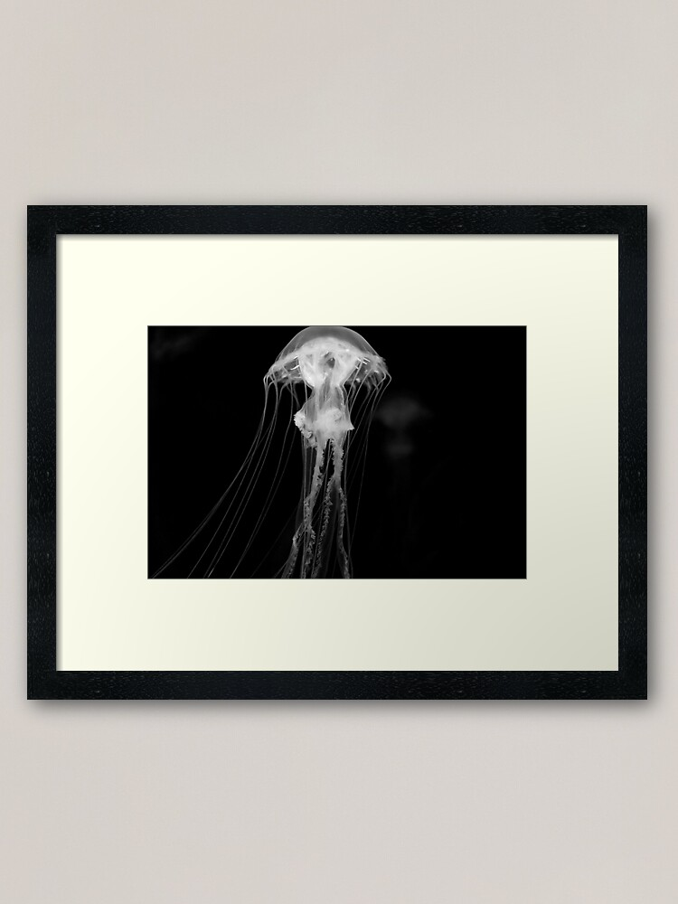 Jellyfish Framed Art Print By Signosis Redbubble