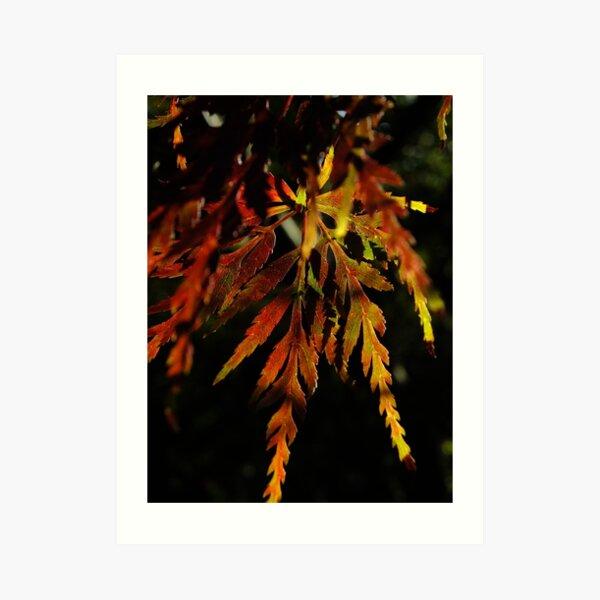 One pretty leaf in Autumn colours Art Print