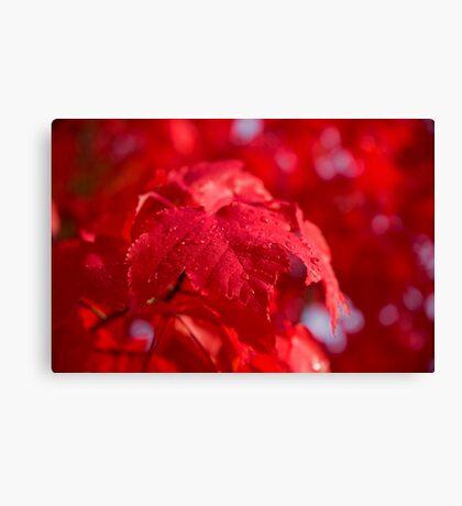 Autumn Dew Canvas Print