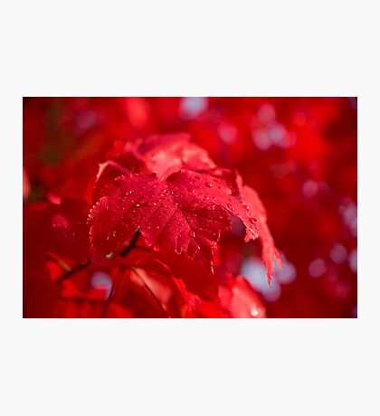Autumn Dew Photographic Print