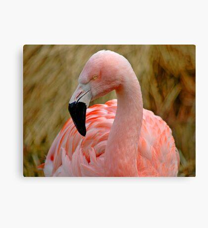 Flamingo 1 Canvas Print
