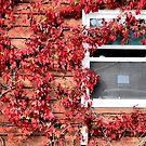 October's Window by Riggzy