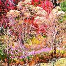Autumn Brilliance by John Poon