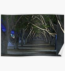Tree Tunnel Poster