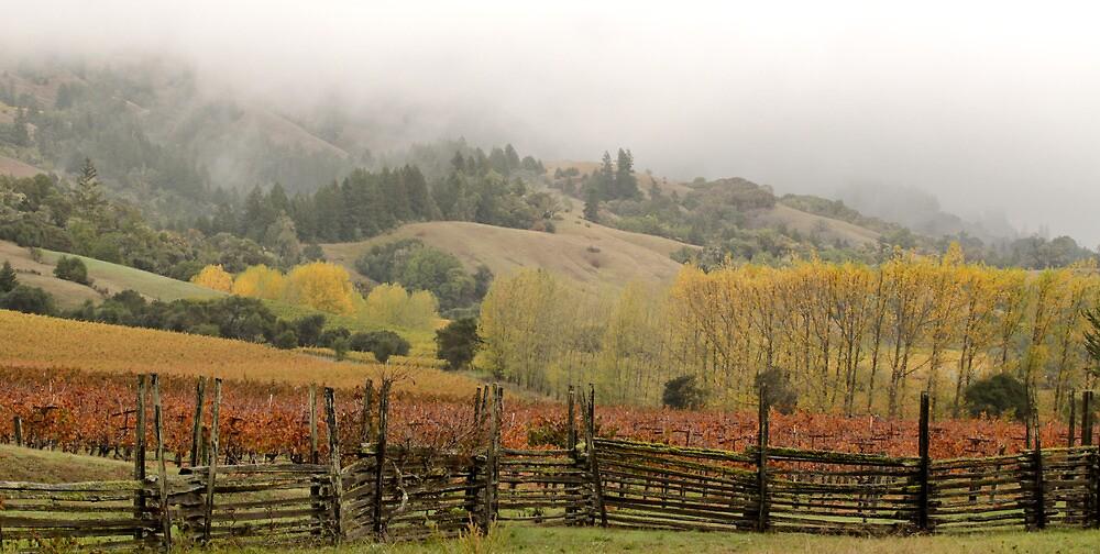 Mendocino Vineyard by Denice Breaux
