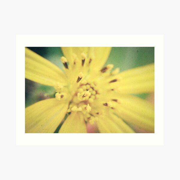 Yellow Blossom Art Print