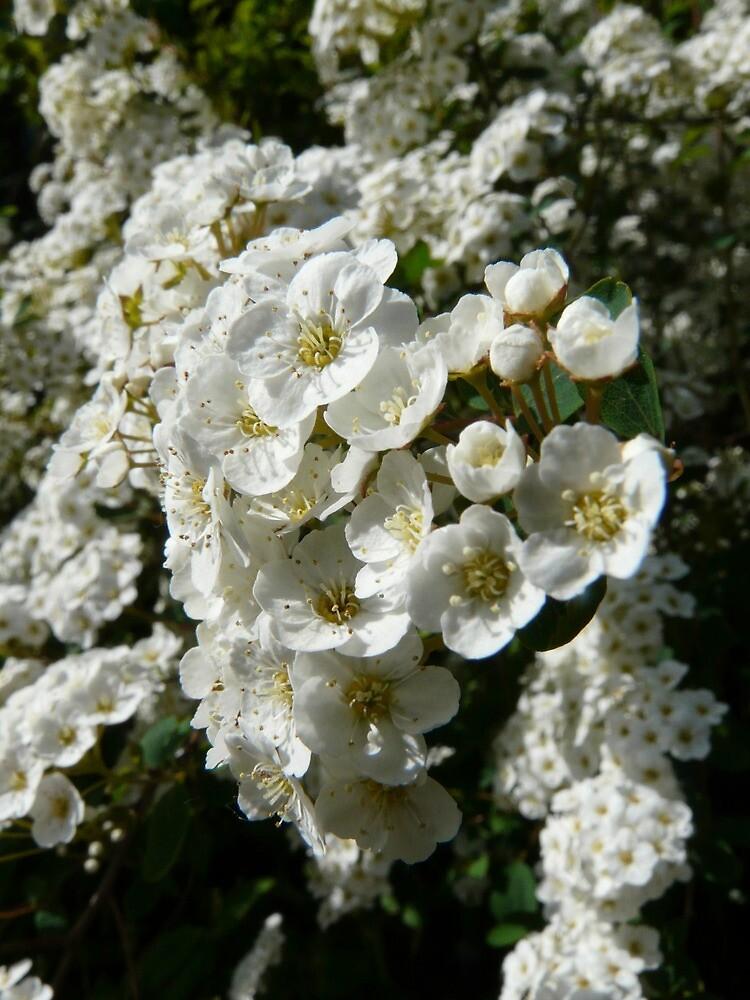 White Flowers by Emily Clarke