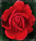dramatically red by Teresa Pople