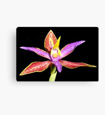 Queen of Sheba orchid Canvas Print
