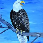Bald Eagle  by maggie326