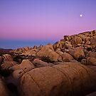 Sunset at Joshua Tree 6065 by Zohar Lindenbaum