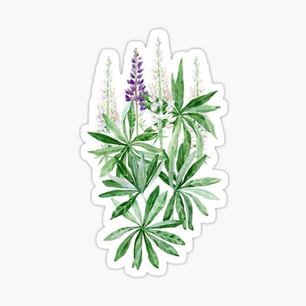 Lupin flower  Sticker