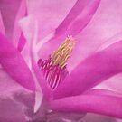 magnolia dream by hannes cmarits
