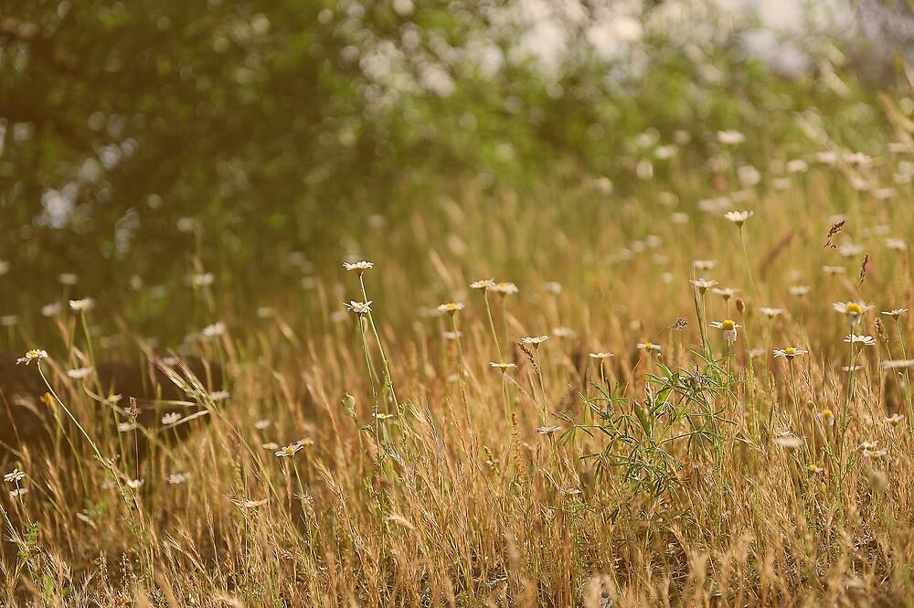 Flowers field by Peppedam