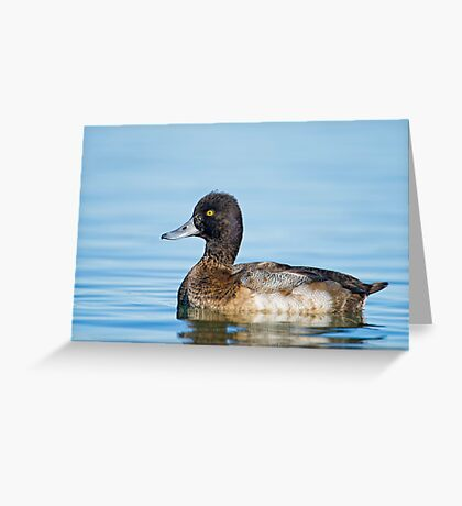 Approachable Scaup Greeting Card