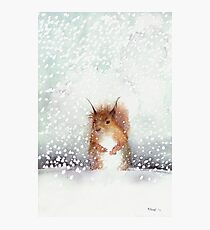 Red Squirrel in the Snow, or, Who Stole My Nuts? Photographic Print