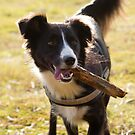 Fahra's stick by BrightBrownEyes