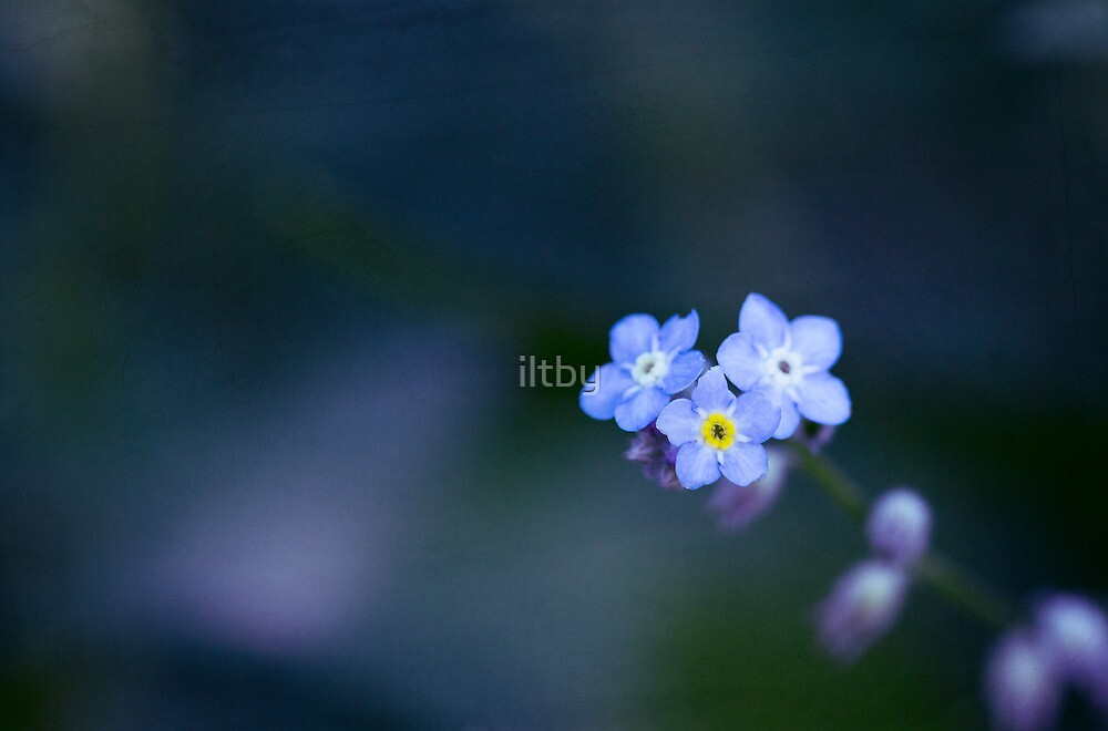 Loneliness by iltby
