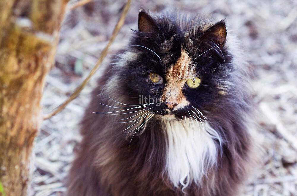 RIP Gorgeous Rosie by iltby