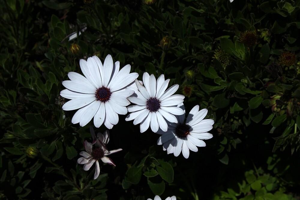 Flowers in a Garden by rhamm