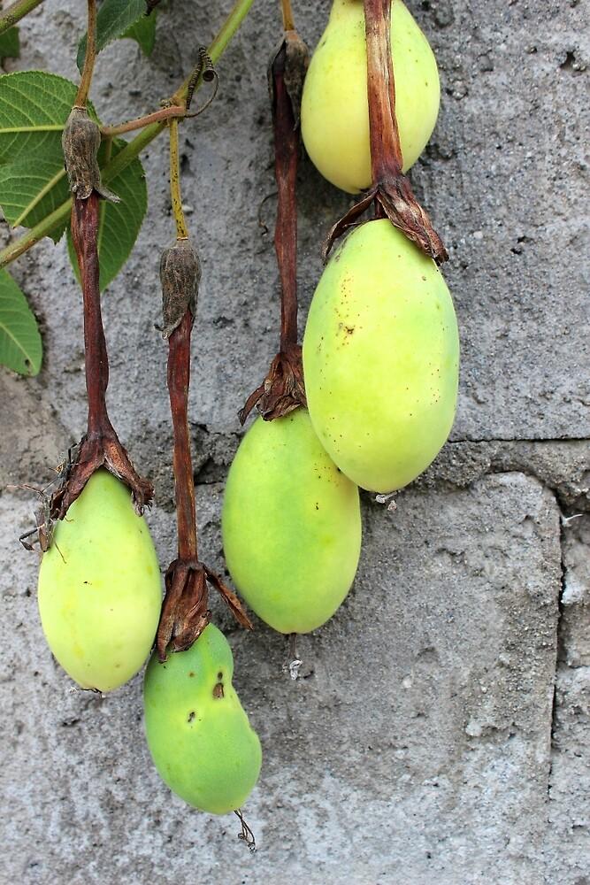 Taxo Fruit on a Vine by rhamm
