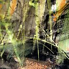 """""""chikurin""""..... light piercing the forest floor by banrai"""