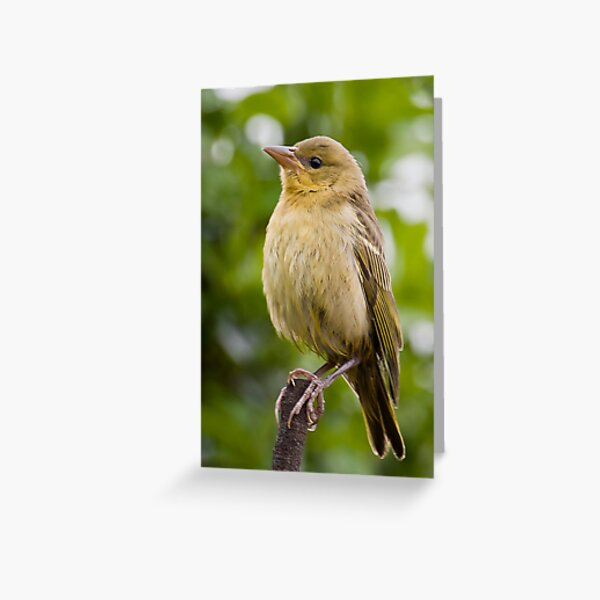 Light Brown Outfit Greeting Card