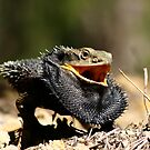 Eastern Bearded Dragon by Erland Howden