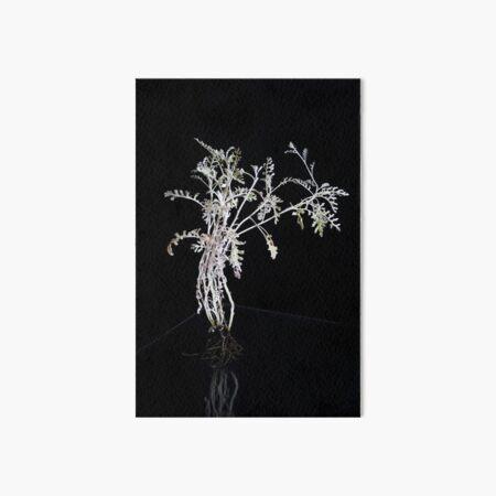 Pflanze vor schwarz (1) Galeriedruck