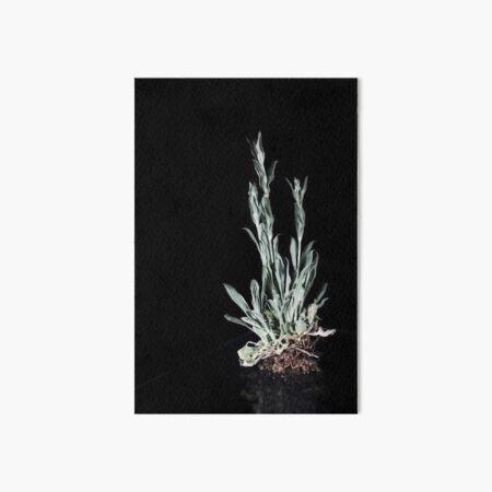 Pflanze vor schwarz (2) Galeriedruck