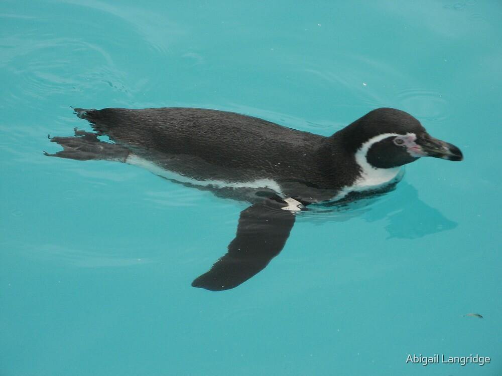 Penguin by Abigail Langridge