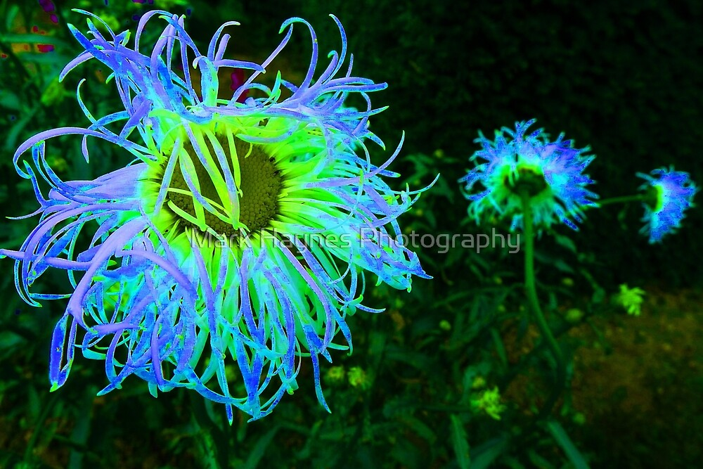Electric Garden by Mark Haynes Photography