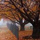Autumn in the graveyard4 by KerrieLynnPhoto