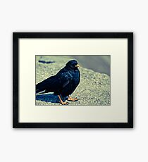 Sitting Bird Framed Print