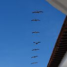 Pelicans above the beach of Puerto Vallarta by Bernhard Matejka