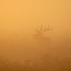Red Deer Rut at Sunrise by Kasia Nowak