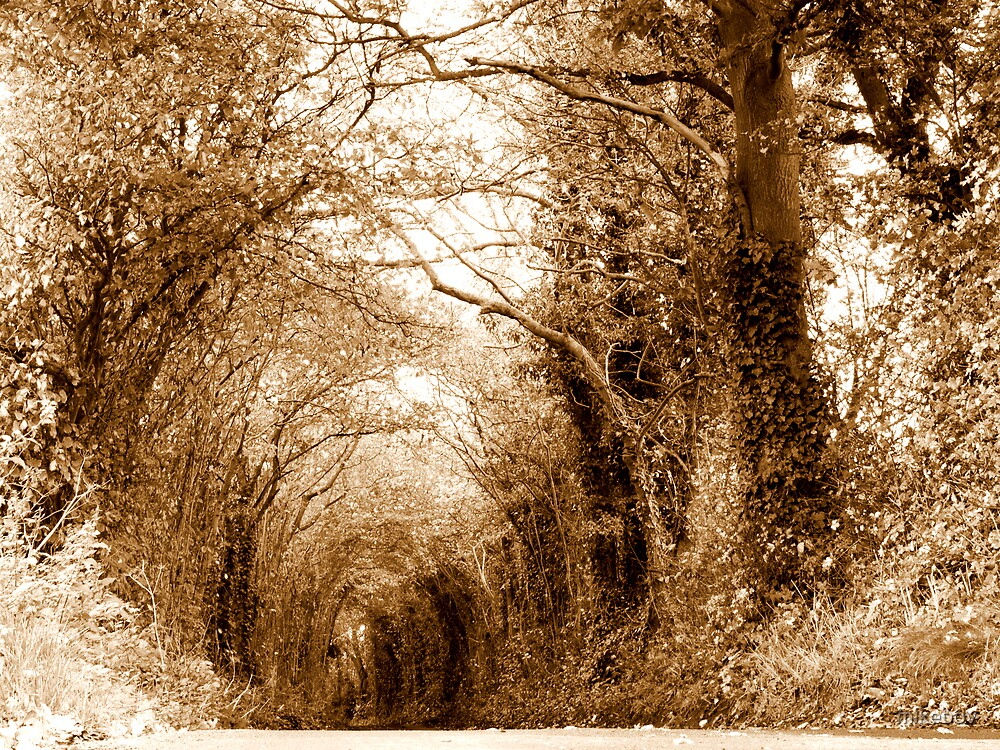 A Living Tunnel by mikebov