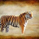 Tiger by NewfieKeith