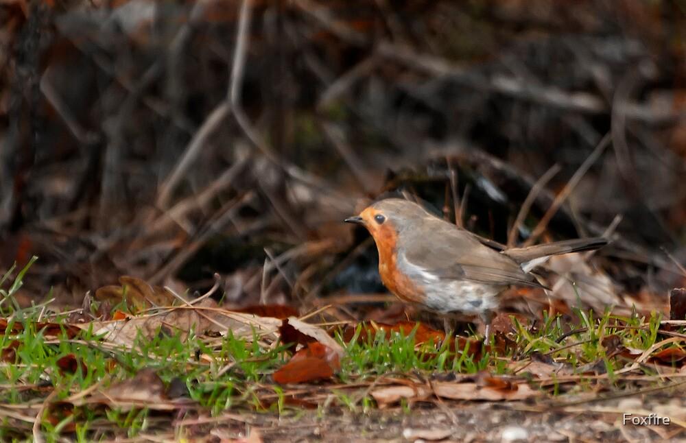 Robin in Autumn - card by Foxfire