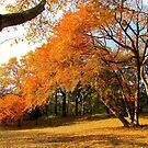 Autumn in New York, Central Park by Alberto  DeJesus
