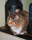 Brett's cats - firstly - Tilly by Odille Esmonde-Morgan
