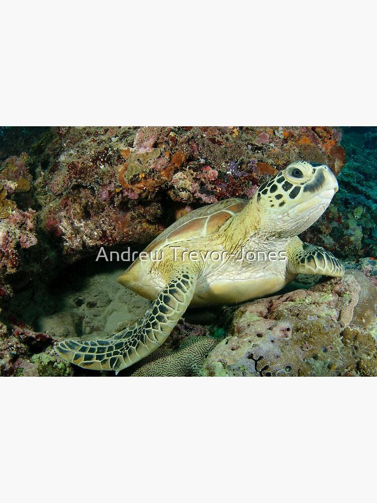 Green turtle - Chelonia mydas by andrewtj